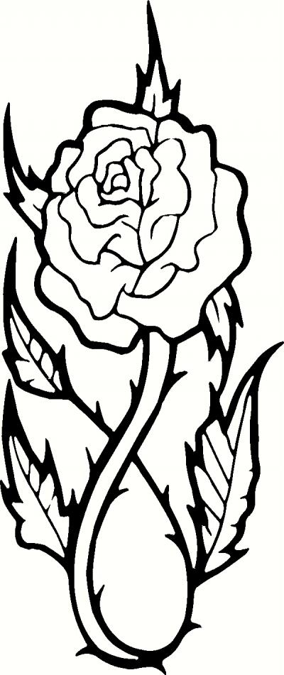 Rose Bushes Drawing Thorns Drawing Rose Bush